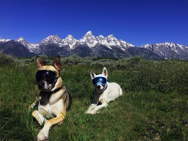 Perfeito para cachorros aventureiros. (Foto: Reprodução / Rex Specs)