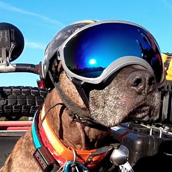 Óculos que protegem os olhos dos cães. (Foto: Reprodução / Instagram / Rex Specs)