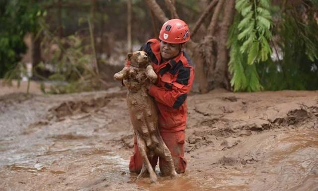 Um trabalho comovente. (Foto: Reprodução / Facebook /  Associação Ouropretana de Proteção Animal)