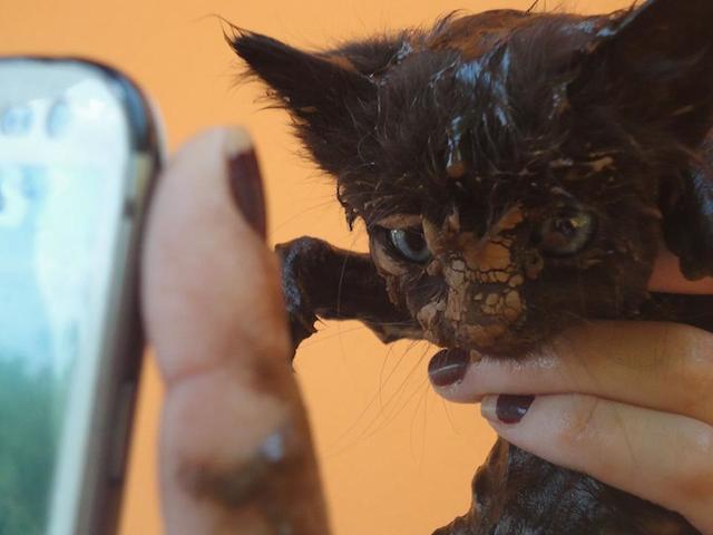 Gatinho que foi resgatado na lama.  (Foto: Reprodução / Facebook /  Instituto de Defesa dos Direitos Animais de Ouro Preto)