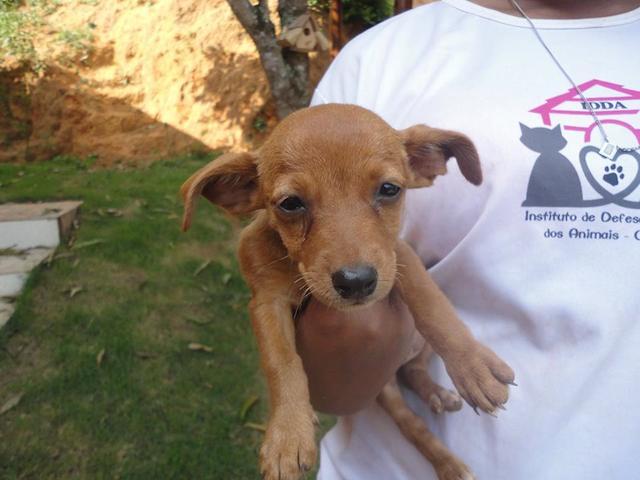 Cachorrinho resgatado.  (Foto: Reprodução / Facebook /  Instituto de Defesa dos Direitos Animais de Ouro Preto)