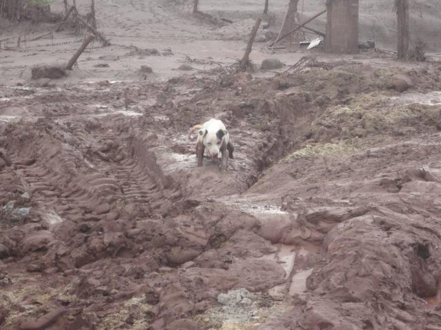 O trabalho parece não ter fim.  (Foto: Reprodução / Facebook /  Instituto de Defesa dos Direitos Animais de Ouro Preto)