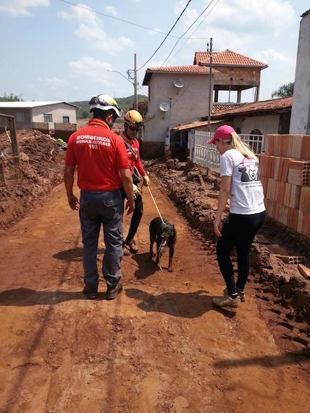 Equipes trabalham sem parar.  (Foto: Reprodução / Facebook /  Instituto de Defesa dos Direitos Animais de Ouro Preto)