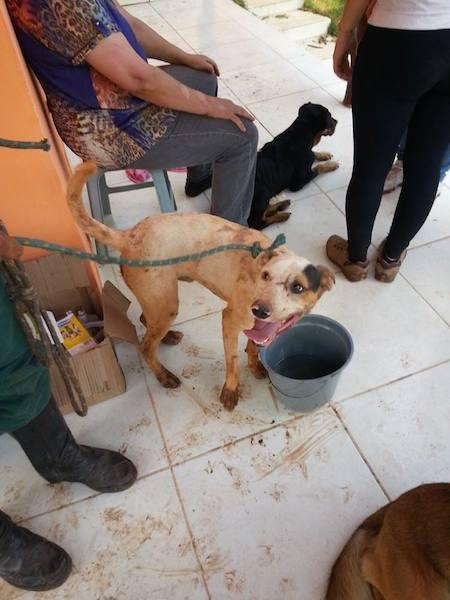 Os animais estão sob os cuidados de ONGs.  (Foto: Reprodução / Facebook /  Instituto de Defesa dos Direitos Animais de Ouro Preto)