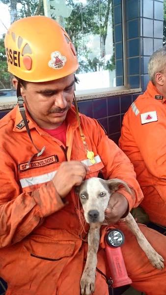 Bombeiro fazendo carinho em cachorro. (Foto: Reprodução / Facebook /  Corpo de Bombeiros Militar de Minas Gerais)