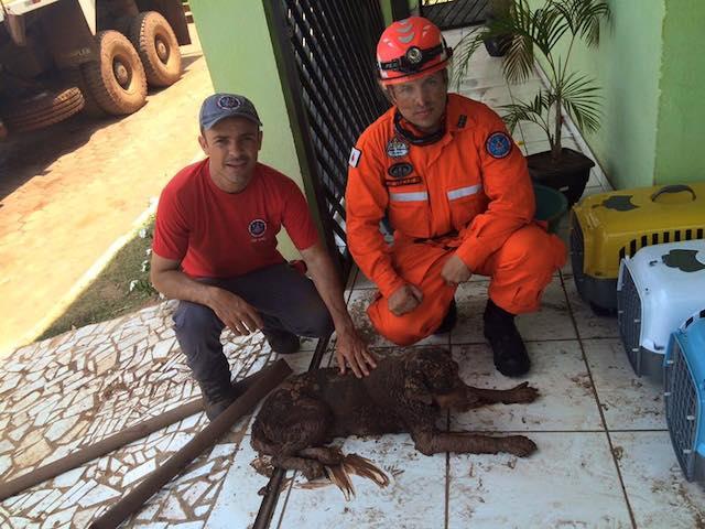 Orgulho por salvar vidas. (Foto: Reprodução / Facebook /  Corpo de Bombeiros Militar de Minas Gerais)