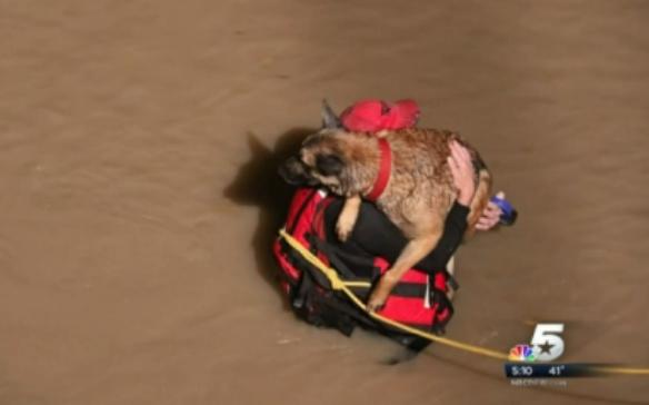 Bombeiro tirando o cachorro da enchente.  (Foto: Reprodução / NBC DFW / Michael O'Keefe)