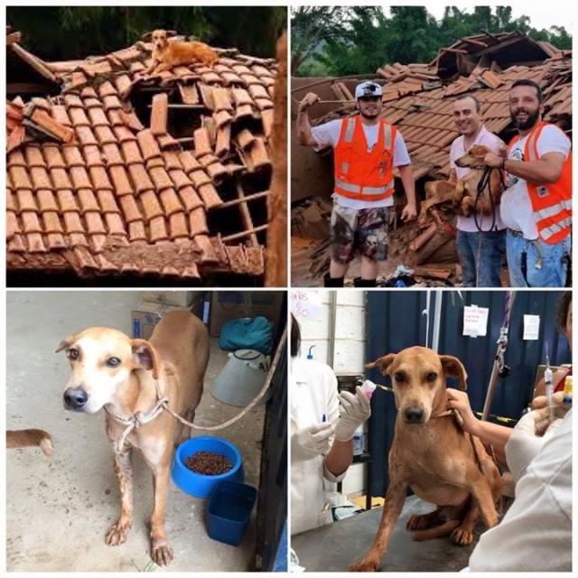 Resgate de um cão em cima do telhado. (Foto: Reprodução / Facebook / Instituto Luisa Mell)