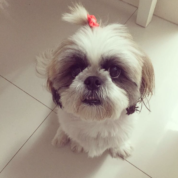 Nina. (Foto: Reprodução / Instagram)