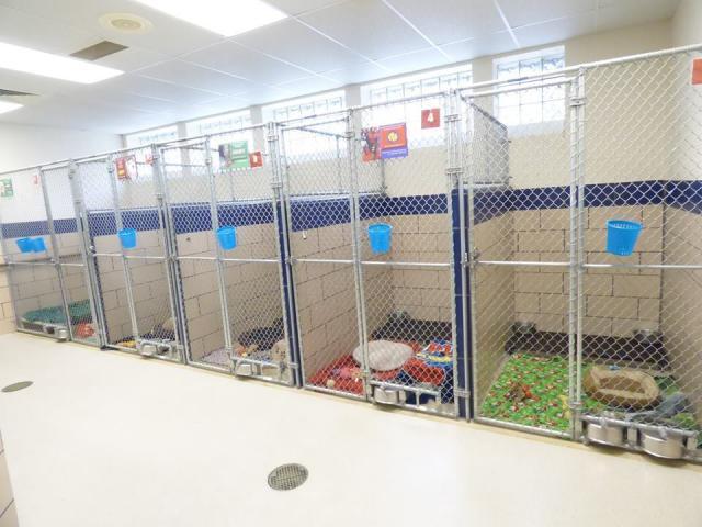 O abrigo ficou vazio porque todos os animais foram adotados. (Foto: Reprodução / Facebook)