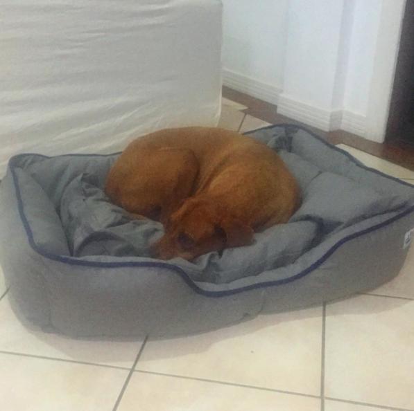 Antônia Fontenelle alfinetou as filhas de Marcos Paulo ao dizer que ninguém quis ficar com o cachorro. (Foto: Reprodução / Instagram)