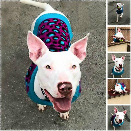 Marshmallow está mais feliz depois de receber tanto carinho. (Foto: Reprodução / Facebook / Unleashed Pet Rescue and Adoption)