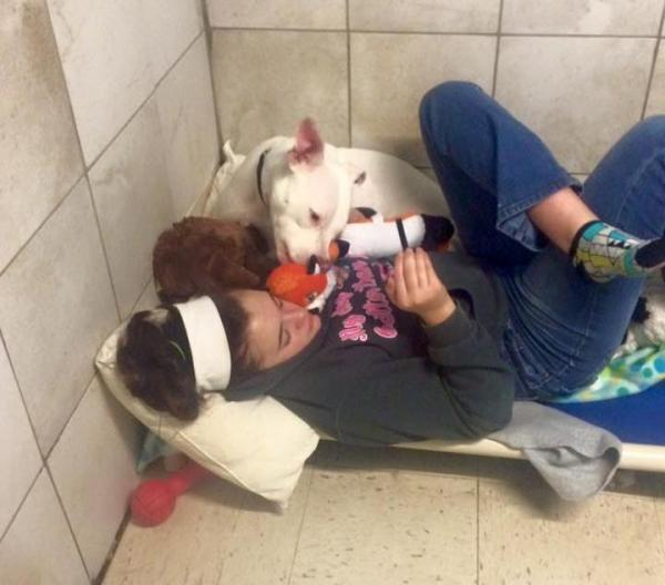Destiny fazendo companhia para a pit bull. (Foto: Reprodução / Facebook / Unleashed Pet Rescue and Adoption)