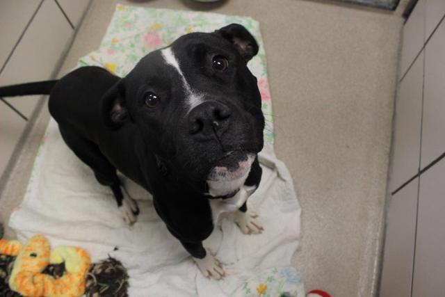 Lucky, um dos cães adotados neste dia. (Foto: Reprodução / Facebook)