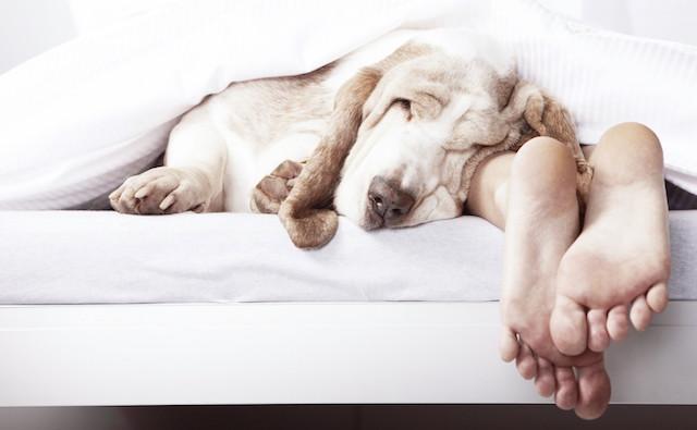 Você dorme com seu cachorro? (Foto: Reprodução / Google)