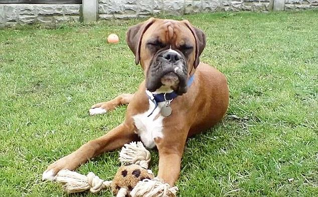 Os tutores ficaram arrasados com a morte do cão Dylan. (Foto: Reprodução / Daily Mail UK)