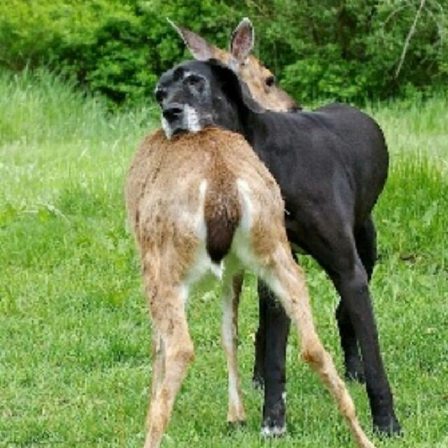 cachorro-e-cervo-02