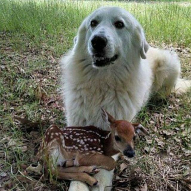 cachorro-e-cervo-03