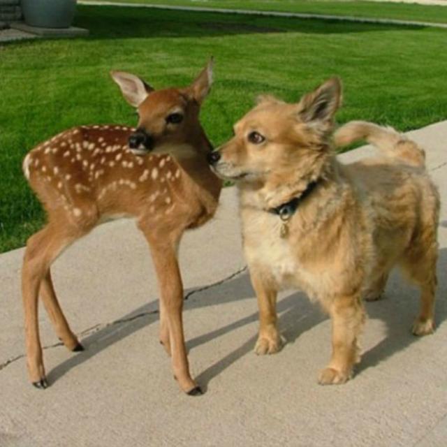 cachorro-e-cervo-05