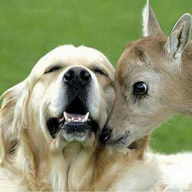 cachorro-e-cervo-06