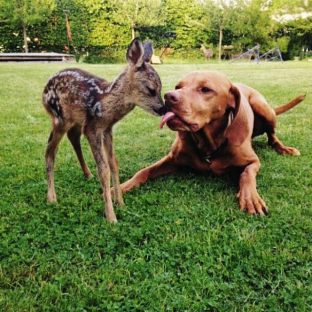 cachorro-e-cervo-09c