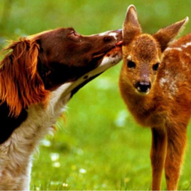 cachorro-e-cervo-09d