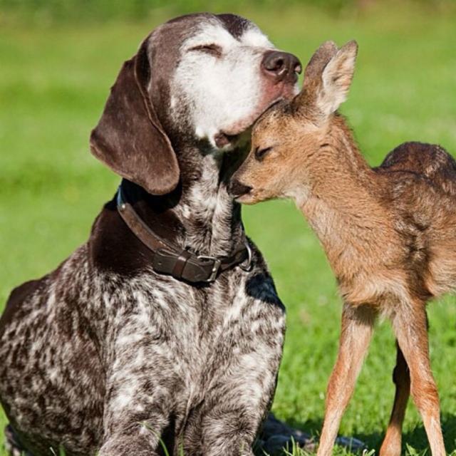 cachorro-e-cervo-09e