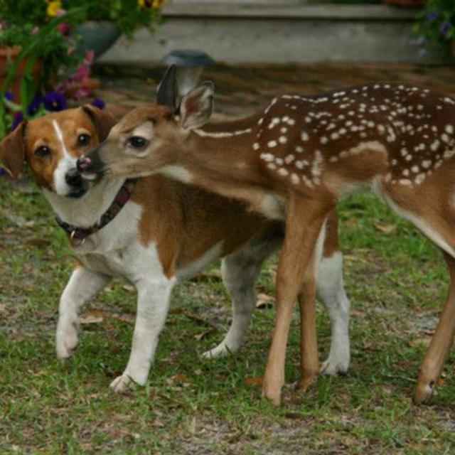 cachorro-e-cervo-09f
