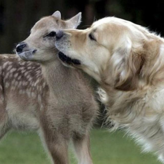 cachorro-e-cervo-8
