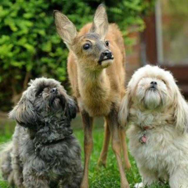 cachorro-e-cervo-9b