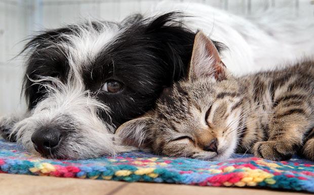 É importante que os pets envelheçam com saúde. (Foto: Reprodução / Telegraph)