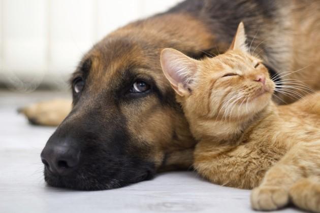 Os gatos costumam viver mais tempo do que os cachorros. (Foto: Reprodução / Google)
