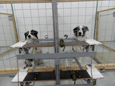 """Cachorro """"doador"""" (direita) tinha a opção de oferecer uma badeja com comida para o cão """"receptor"""" (esquerda). (Foto: Reprodução / Science Daily)"""