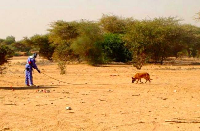 O faro dos cães é poderoso.  (Foto: Reprodução / Bark Post)