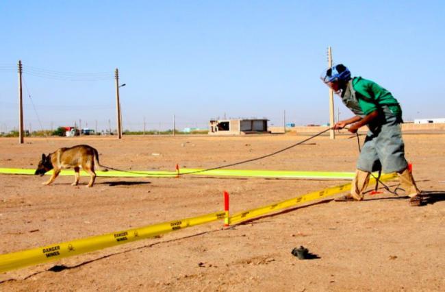 Os cães são treinados em locais livres de explosivos.  (Foto: Reprodução / Bark Post)