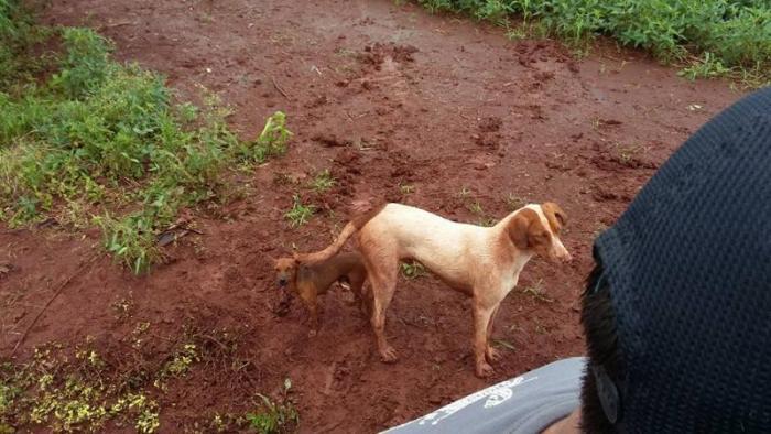 Os cães não queriam sair de perto do tutor. (Foto: Reprodução / Facebook / Carlos Corujinha)