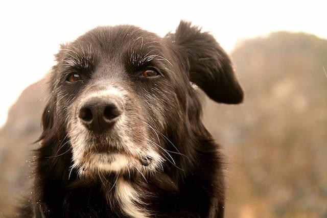 Todos gostariam que seus cães vivessem mais tempo e com saúde. (Foto: Reprodução / Google)