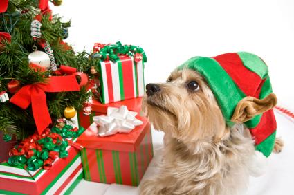 Sabe o melhor presente que você pode dar ao seu cachorro? Amor. (Foto: Reprodução / Google)