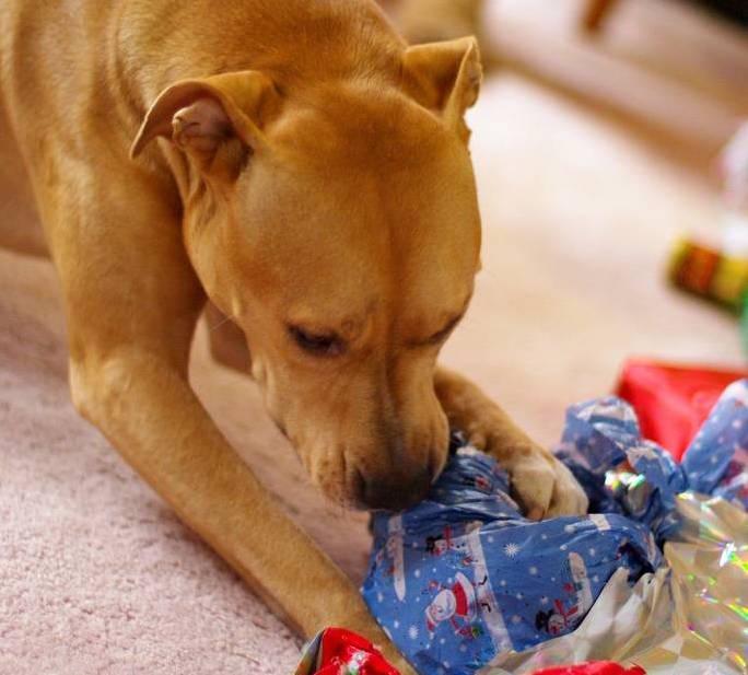 Todo cachorro precisa de uma família. (Foto: Reprodução / Google)