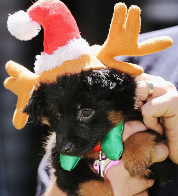 cachorro-roupa-natalina-01