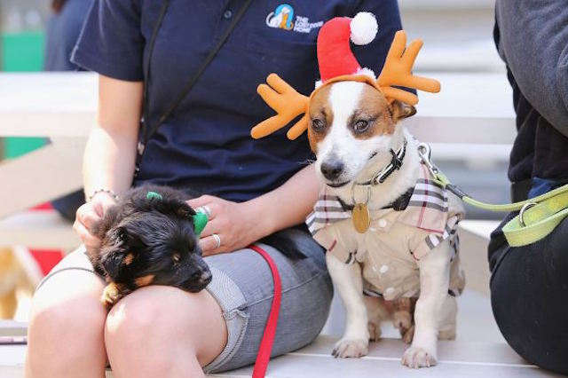 Dogs Get Into Festive Spirit For Best Dressed Competition