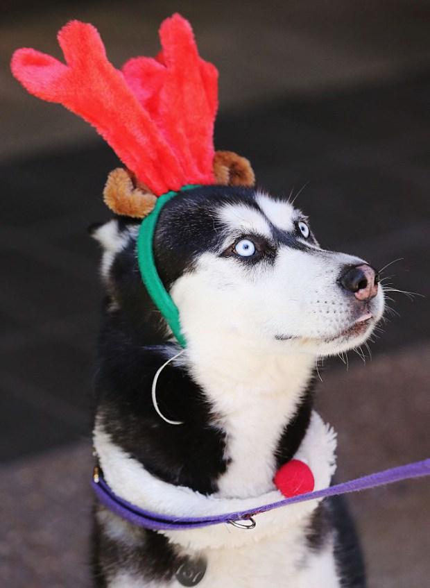 cachorro-roupa-natalina-06