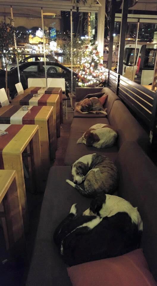 Cachorros dormindo nos sofás da cafeteria grega. (Foto: Reprodução / Facebook)