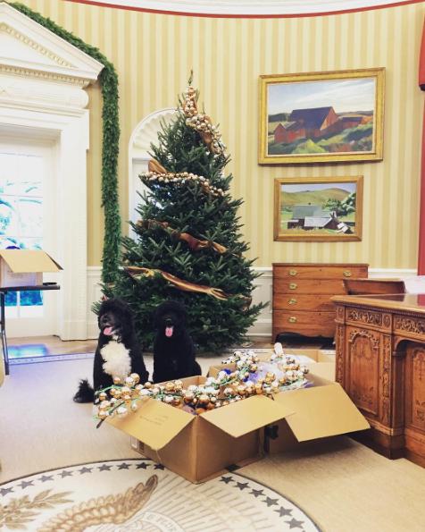 Bo e Sunny Obama ajudando a decorar a Casa Branca. (Foto: Reprodução / Instagram)