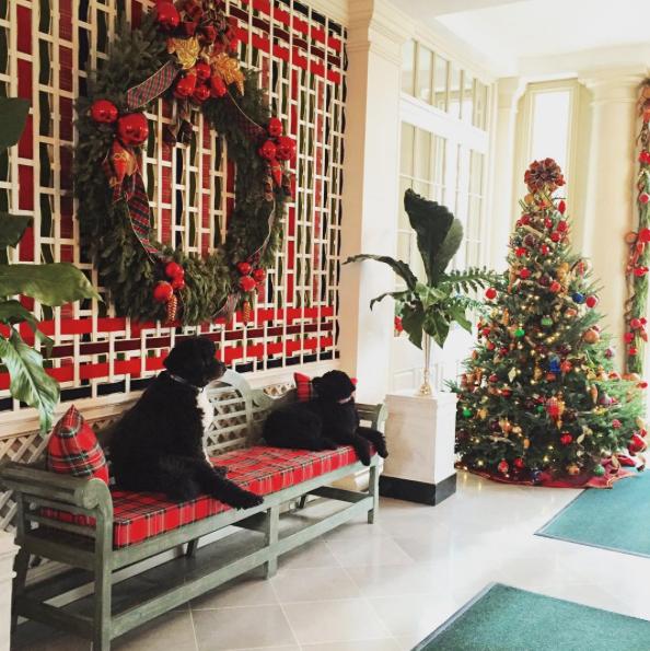 Momento relax dos cães Bo e Sunny. (Foto: Reprodução / Instagram)