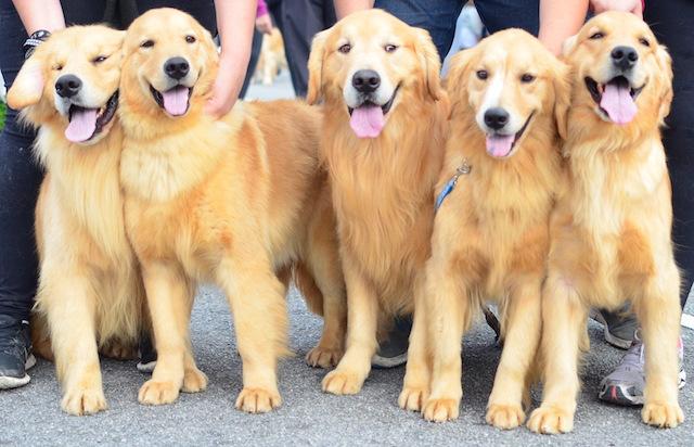 Ao contrário do que se pensava, os cães são capazes do auto-reconhecimento. (Foto: Karina Sakita)