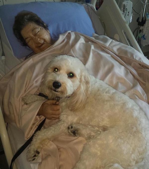 A alegria de ter a companhia de seu pet. (Foto: Reprodução / Zachary's Paws for Healing)