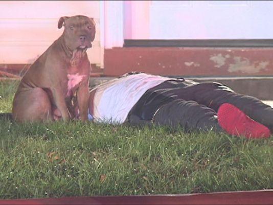 A pit bull Precious protegeu seu tutor. (Foto: Reprodução / W USA 9)