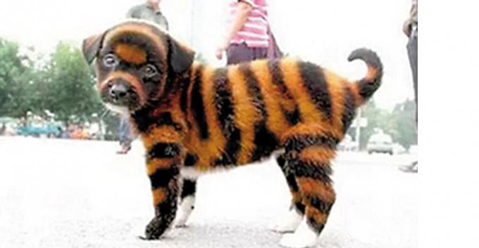 Tintas tóxicas podem causar a morte dos cães. (Foto: Reprodução / Bark Post)