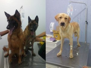 Todos os cães que estavam no local foram resgatados por Eduardo. (Foto: Reprodução / G1 / Eduardo Soares / Arquivo Pessoal)